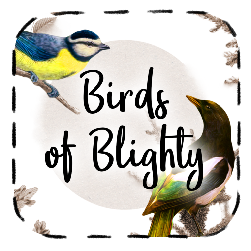 Bird Cards - Thumbnail for Birds of Blighty (Britain) Collection